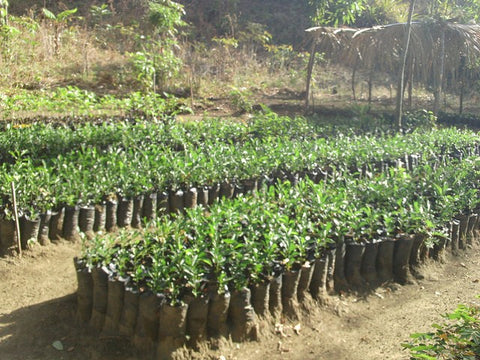 planting trees climate change seed for change nia thomas