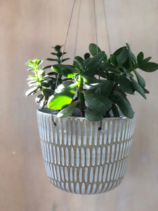 Shell Raw Medium Hanging Planter