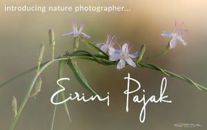 Meet Nature Artist & Photographer, Eirini Pajak