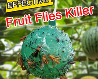 2020 The easiest and best way to catch fruit flies? Yellow stick traps!!!