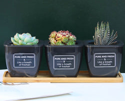 How to Choose the Right Pot for your Succulents?