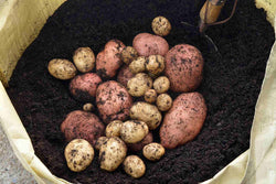 HOW TO GROW POTATOES IN A BAG?