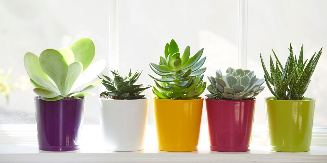 how to choose Succulents pot with kmerlife