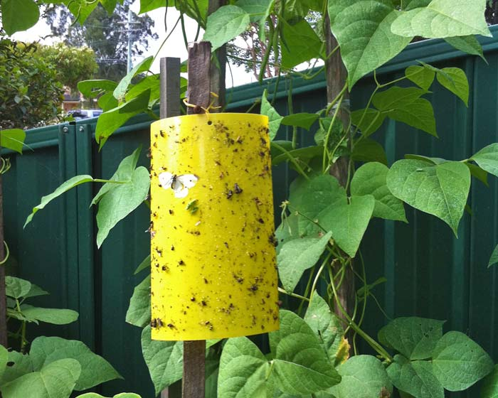 kmerlife yellow insect traps