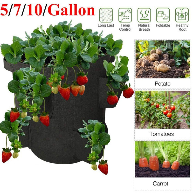 kmerlife10 gallon nature breath strawberry bags