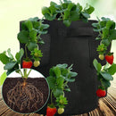 kmerlife black strawberry grow bags