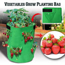 vegetables grow planting bags