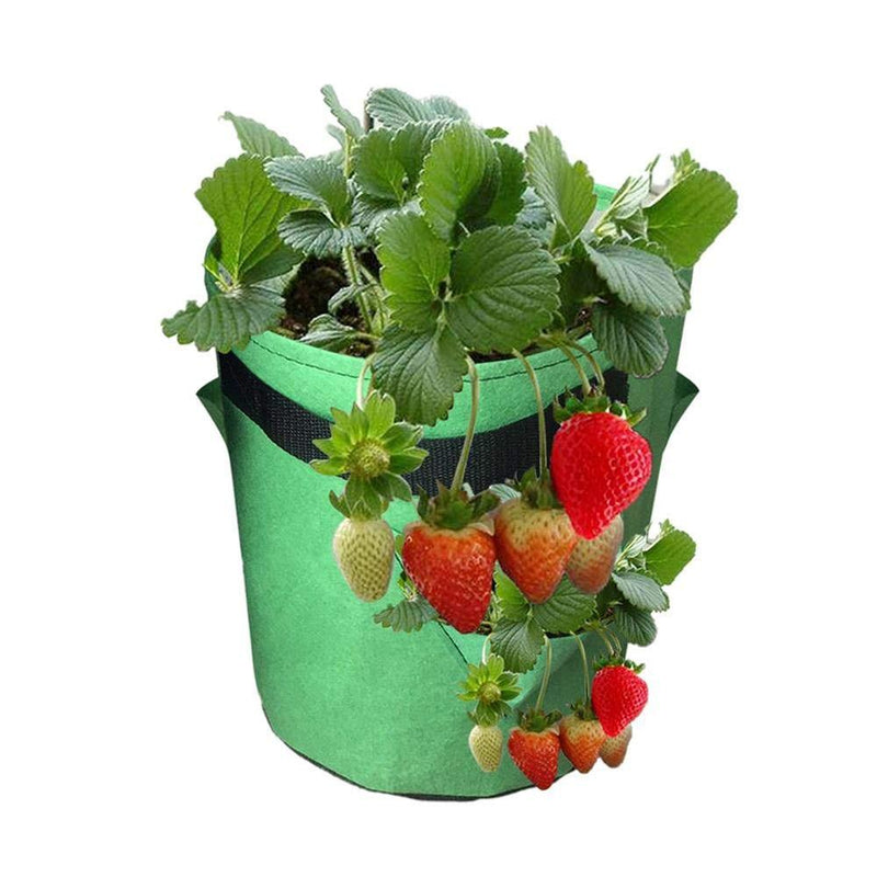 kmerlife green strawberry grow bags
