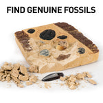 NATIONAL GEOGRAPHIC Mega Fossil Dig Kit – Excavate 15 real fossils including Dinosaur Bones, Mosasaur & Shark Teeth