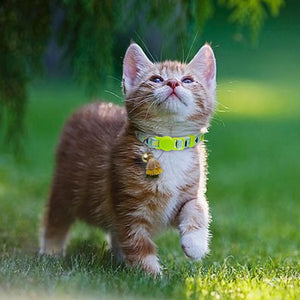Cat Collars, Harnesses, and Leashes
