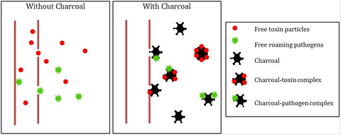 How Charcoal Works