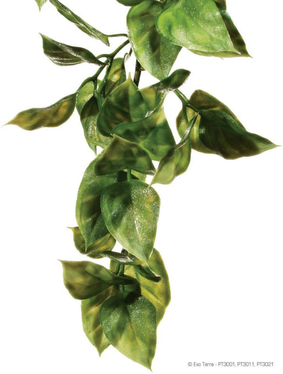 Exo Terra jungle plant amapallo large