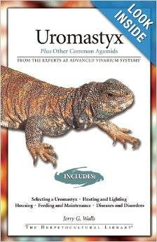 Uromastyx: Plus Other Common Agamids