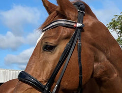 Browband Type F
