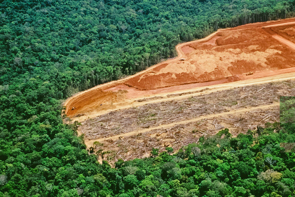 animal agriculture is cause for deforestation