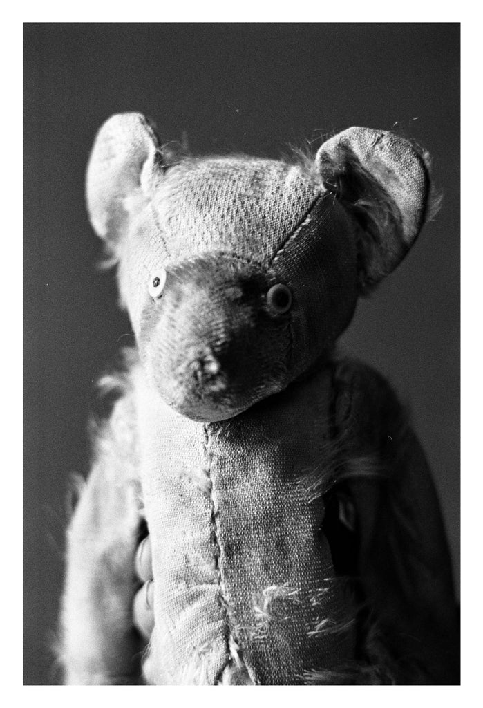 Portrait Bear