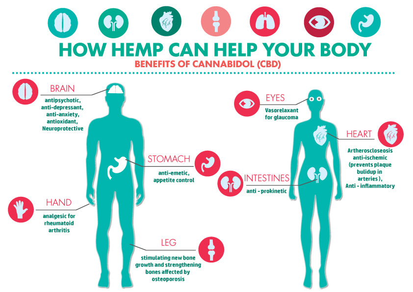 HOW HEMP CAN HELP YOUR BODY