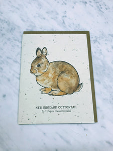 Cottontail card