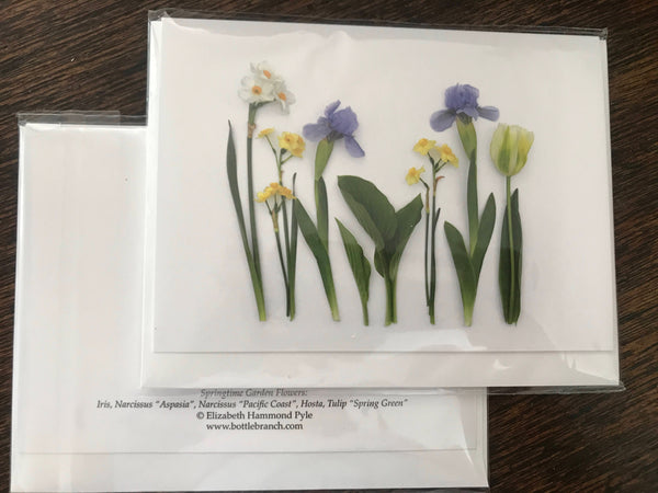 iris and daffodils