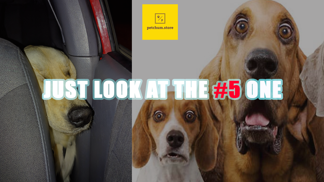 Top 7 Cutest Embarrassments in the Life of 7 Pets. #5 is Hilarious!