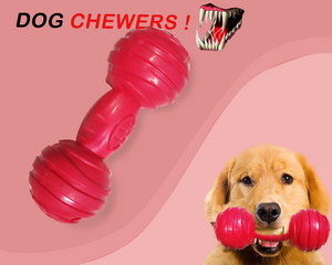 Chewing Dumbbell - Pet Chum