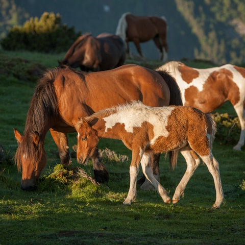 Zen Teaser Jigsaw Puzzle Foal In Mountain Sunrise