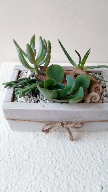 Succulents - Small Rectangle Planter Box approx (90mm x 150mm)