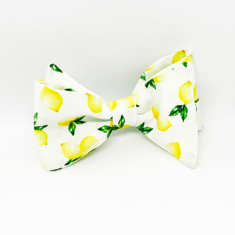 Monsieur Pet Bow Tie in When Life Gives you Lemons