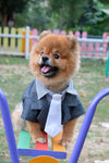 Green Tuxedo Suit Jacket for Small Dog