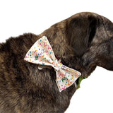 Confetti Over The Collar Dog Bow Tie