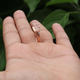 1 Pc Morganite Ring, Rose Gold Finish 925 Sterling Silver Ring, Pink Morganite Vintage Ring, Antique Jewelry,  RD389
