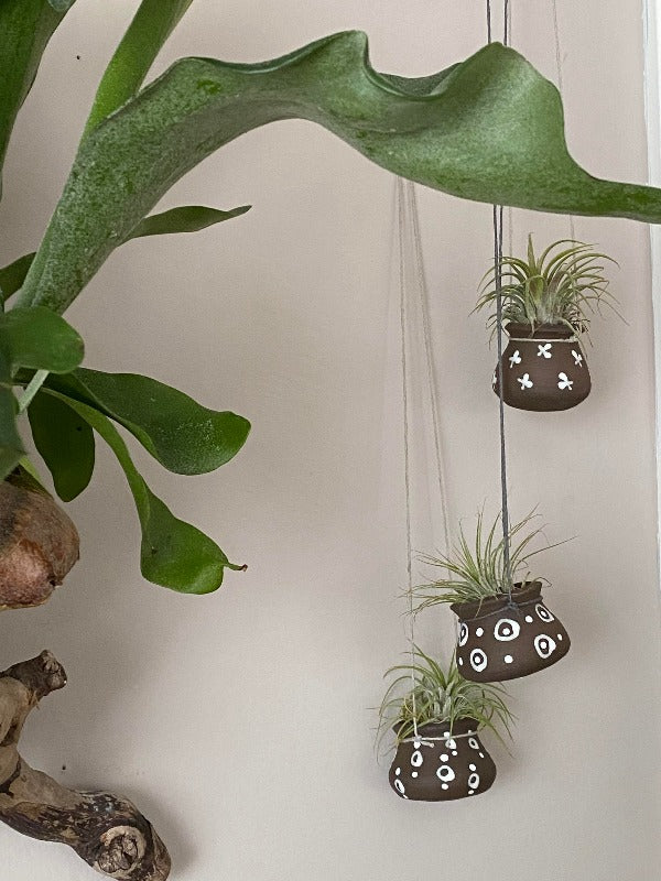 Air plant hanging pot (1)