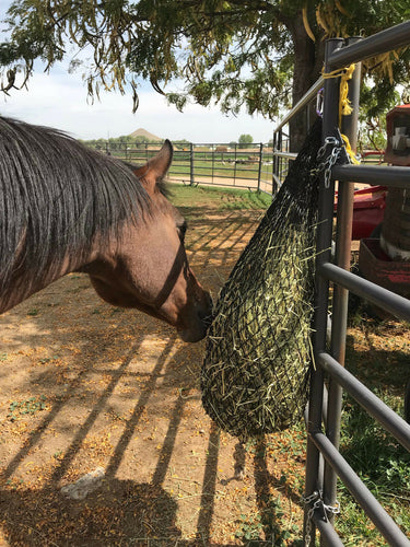 Horse eating hay from a black hay net