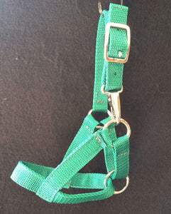 Weanling Halter - Poly