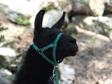 Load image into Gallery viewer, Llama Halter - Trail