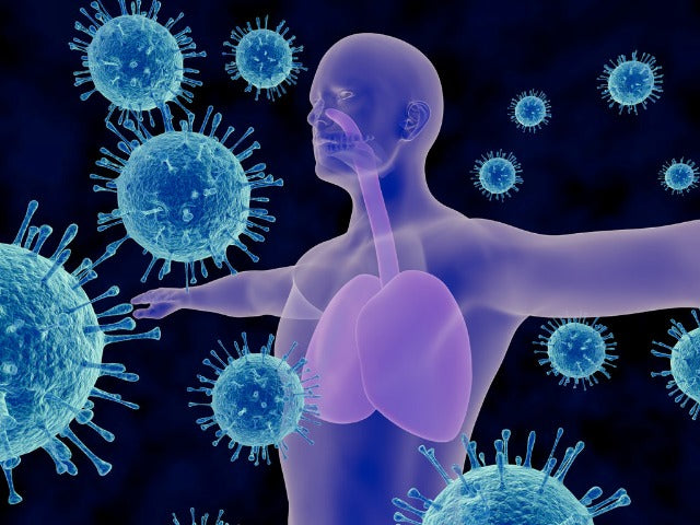 CBD and Immune System: How CBD Can Help to Bolster Your Immune System?