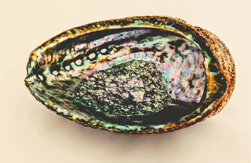 Abalone Shell (Large)