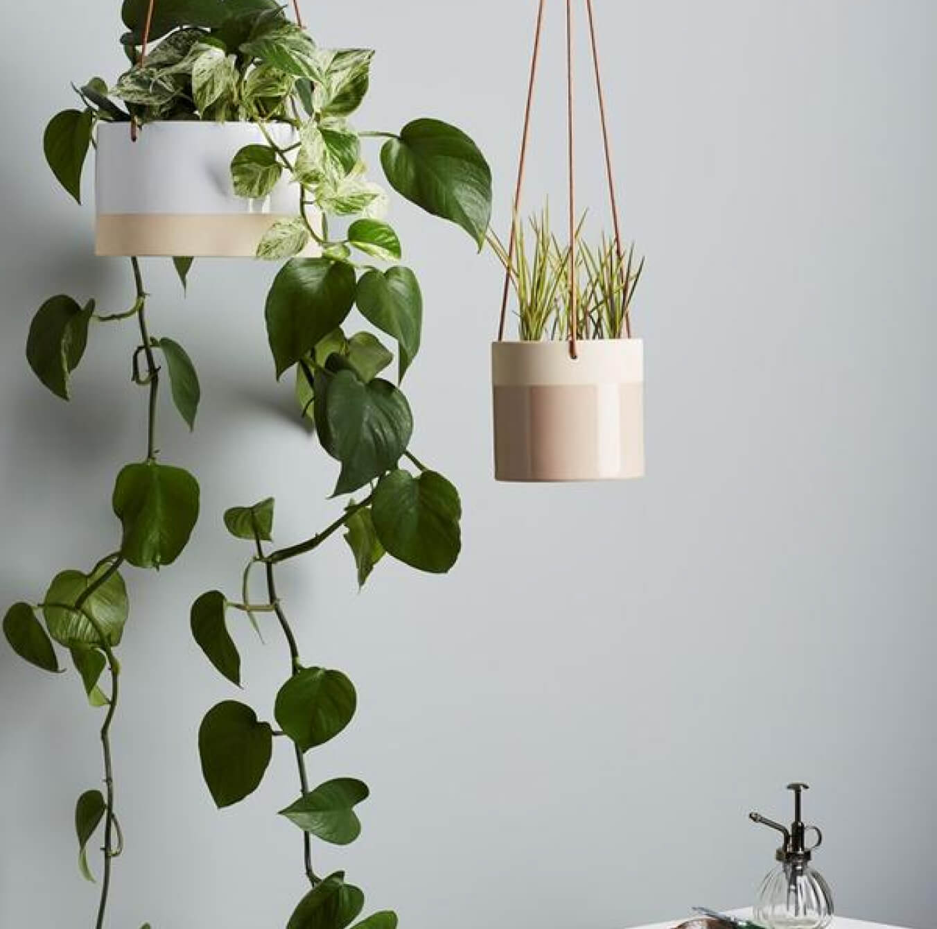 How's it hanging? How to hang plants from your ceiling in less than 20 minutes