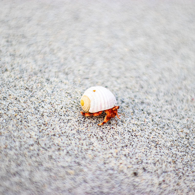 crab on the sand next to a clean ocean