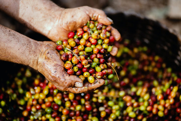 5 Reasons Why Costa Rican Coffee Is One Of The Best!