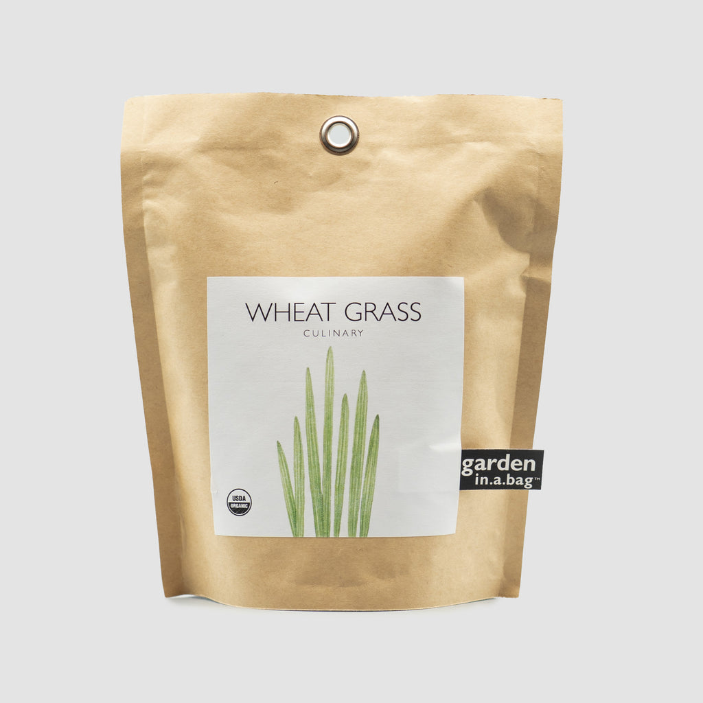 Garden In A Bag - Wheat Grass