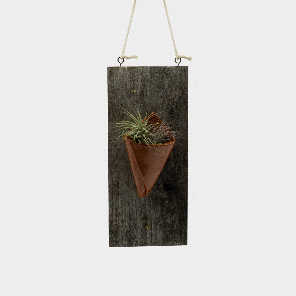 MF Pottery Air Plant Holder: Berry