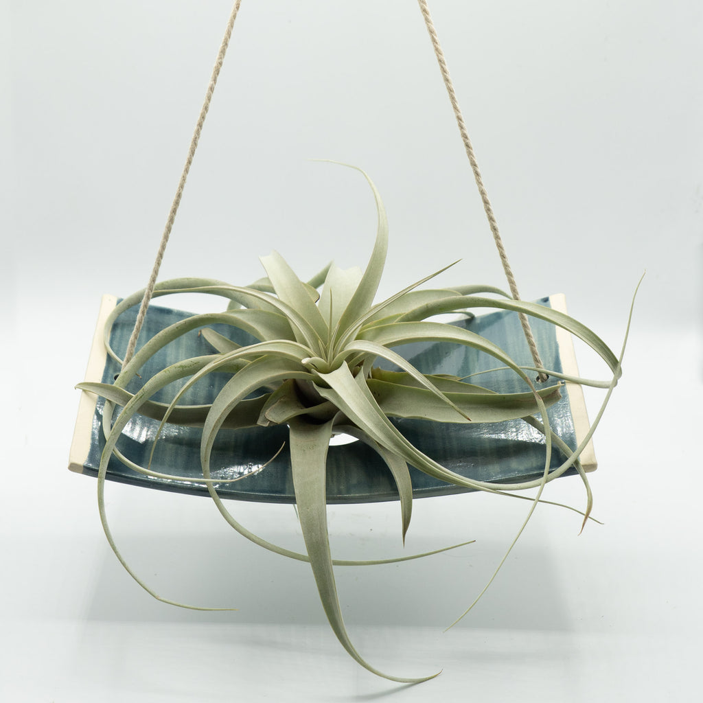 MF Pottery Large Indigo Hanging Air Plant Holder