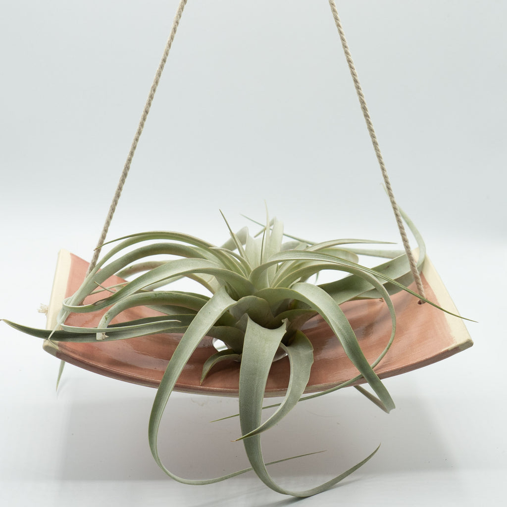 MF Pottery Large Blush Hanging Air Plant Holder