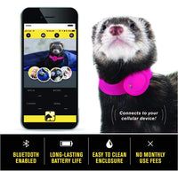 Marshall Ferret Finder Pink