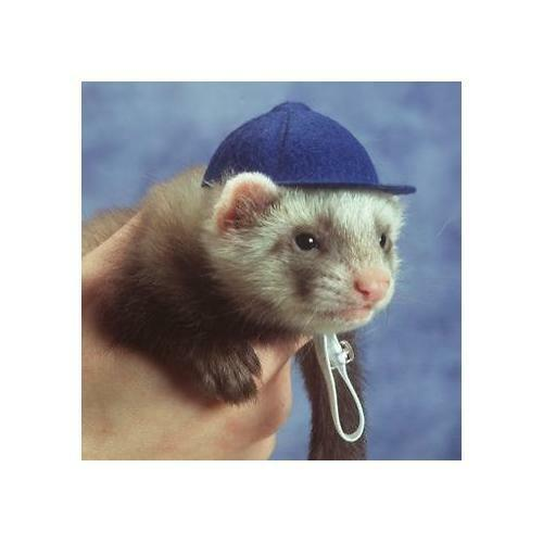 Marshall Pet Ferret Baseball Cap Hat - Blue
