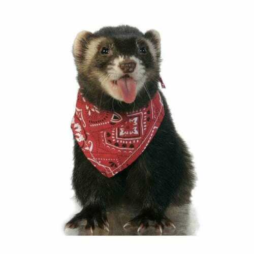 Ferret Bandana, Red