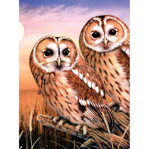 Paint By Numbers Junior small Tawny owls