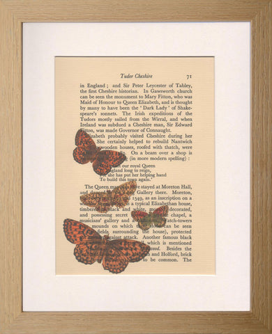 Vintage Cheshire print: Red butterflies