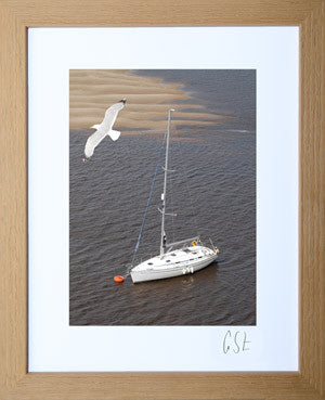 'Soaring gull over Conwy harbour' print